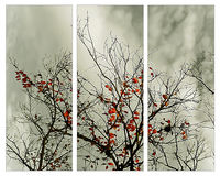 Triptych with natural motive Royalty Free Stock Images