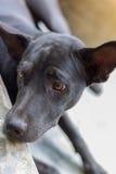 Tristemente cane Fotografia Stock Libera da Diritti