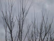 Tristesse désolé stérile de l'hiver photo libre de droits