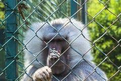 Tristesse dans une cage Images libres de droits