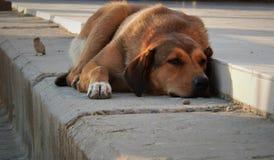 Tristezza degli uccelli del cane fotografia stock