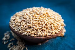 Triticum,Wheat grains in a clay bowl on a bluish surface. Stock Photography