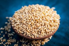 Triticum,Wheat grains in a clay bowl on a bluish surface. Royalty Free Stock Photo