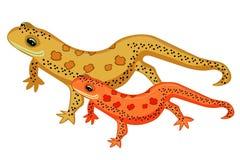 Triton-het Amerikaanse rode bevlekte de salamanders van het Oosten glimlachen Vector vector illustratie
