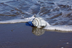 Tritonshorn Shell Reflection stockfotografie