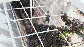 Trituradora de Stemmer que machaca las uvas en un lagar almacen de metraje de vídeo