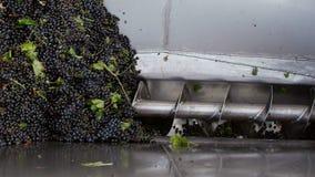 Trituradora de Stemmer que machaca las uvas en un lagar metrajes