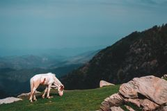 Triund stock photography