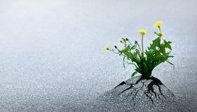 Triunfos de la vida contra todas las probabilidades Imagen de archivo