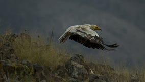 tro kan flyga I Arkivbild