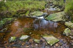 Tro Maret rzeka, Ardennes, Belgia Zdjęcie Stock