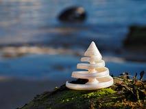 Troca se développant en spirales Shell image libre de droits