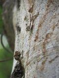Trochę domowa jaszczurka zdjęcie stock