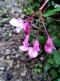 trochę piękni kwiaty zdjęcie royalty free