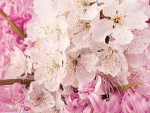 trochę piękni kwiaty Fotografia Royalty Free