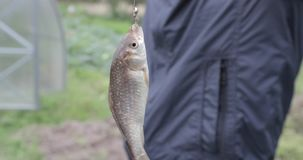 trochę rybi haczyk zbiory