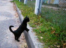 trochę czarny kot Zdjęcie Royalty Free