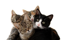 trochę koty Obrazy Stock