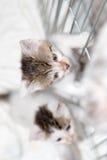 trochę koty Zdjęcia Stock
