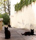trochę trzy koty Fotografia Royalty Free