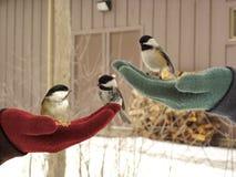 trochę trzy ptaki Obrazy Royalty Free