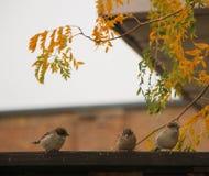 troch? trzy ptaki fotografia stock