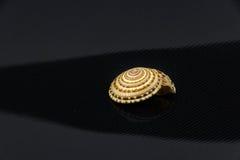 Trochus niloticus Royaltyfri Fotografi