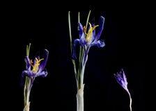 Trockenblume auf Hintergrund Stockfoto