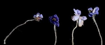 Trockenblume auf Hintergrund Lizenzfreies Stockbild