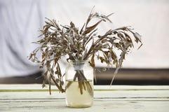 Trockenblume in der Flasche Lizenzfreie Stockbilder
