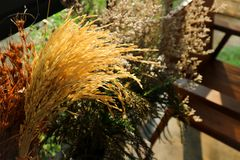 Trockenblume und getrocknete Reispflanze stockfoto