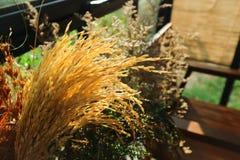 Trockenblume und getrocknete Reispflanze lizenzfreie stockfotos