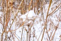 Trockenblume unter dem Schnee Stockfotografie