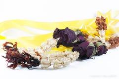 Trockenblumen auf weißem Hintergrund Lizenzfreies Stockfoto