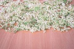 Trockenblumen der Holunderbeere Lizenzfreies Stockfoto