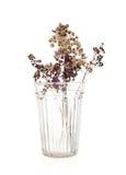 Trockenblumen im Glas Stockfotos