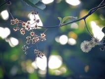 Trockenblumen und getrocknetes Kelchblatt auf Bäumen mit dem Sonnenlicht, das im Garten glänzt Abbildung der roten Lilie Lizenzfreie Stockbilder