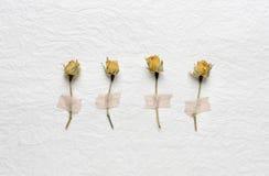Trockenblumen von Rosen auf einem Weißbuch Rosa gelb Lizenzfreies Stockfoto
