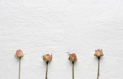 Trockenblumen von Rosen auf einem Weißbuch Rosa gelb Stockfotos