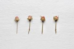 Trockenblumen von Rosen auf einem Weißbuch Rosa gelb Lizenzfreie Stockbilder