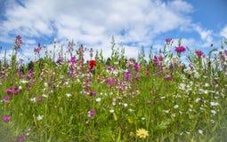 Trockenblumengesteck Wildflowerwiese Stockbilder