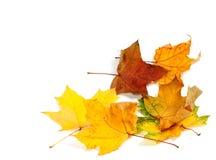 Trockene Ahornblätter des Herbstes an der Ecke Lizenzfreie Stockfotos