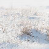 Trockene Anlage bedeckt mit Schnee und Frost auf dem Gebiet Stockfotos