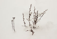 Trockene Anlage des Winters Stockfotos