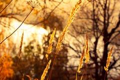 Trockene Anlagen auf dem Hintergrund des Herbstes gestalten landschaftlich Stockbilder