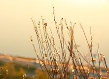 Trockene Anlagen auf dem Hintergrund des Herbstes gestalten landschaftlich Lizenzfreies Stockbild