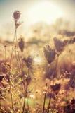 Trockene Anlagen des Herbstes auf Wiese mit Sonnenlicht stockbild