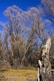 Trockene Bäume Stockfotos