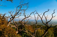 Trockene Bäume Lizenzfreie Stockfotografie