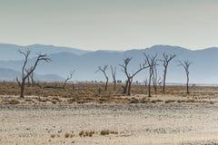 Trockene Bäume Stockbild